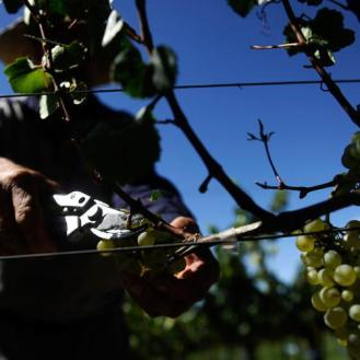 Vinhos do Brasil 1