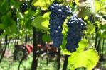 Vinhos do Brasil 2
